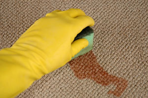 cleaning a carpet stain